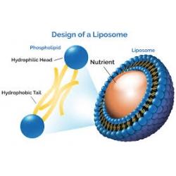 Liposoomide revolutsioon vitamiinide inimorganismi viimises